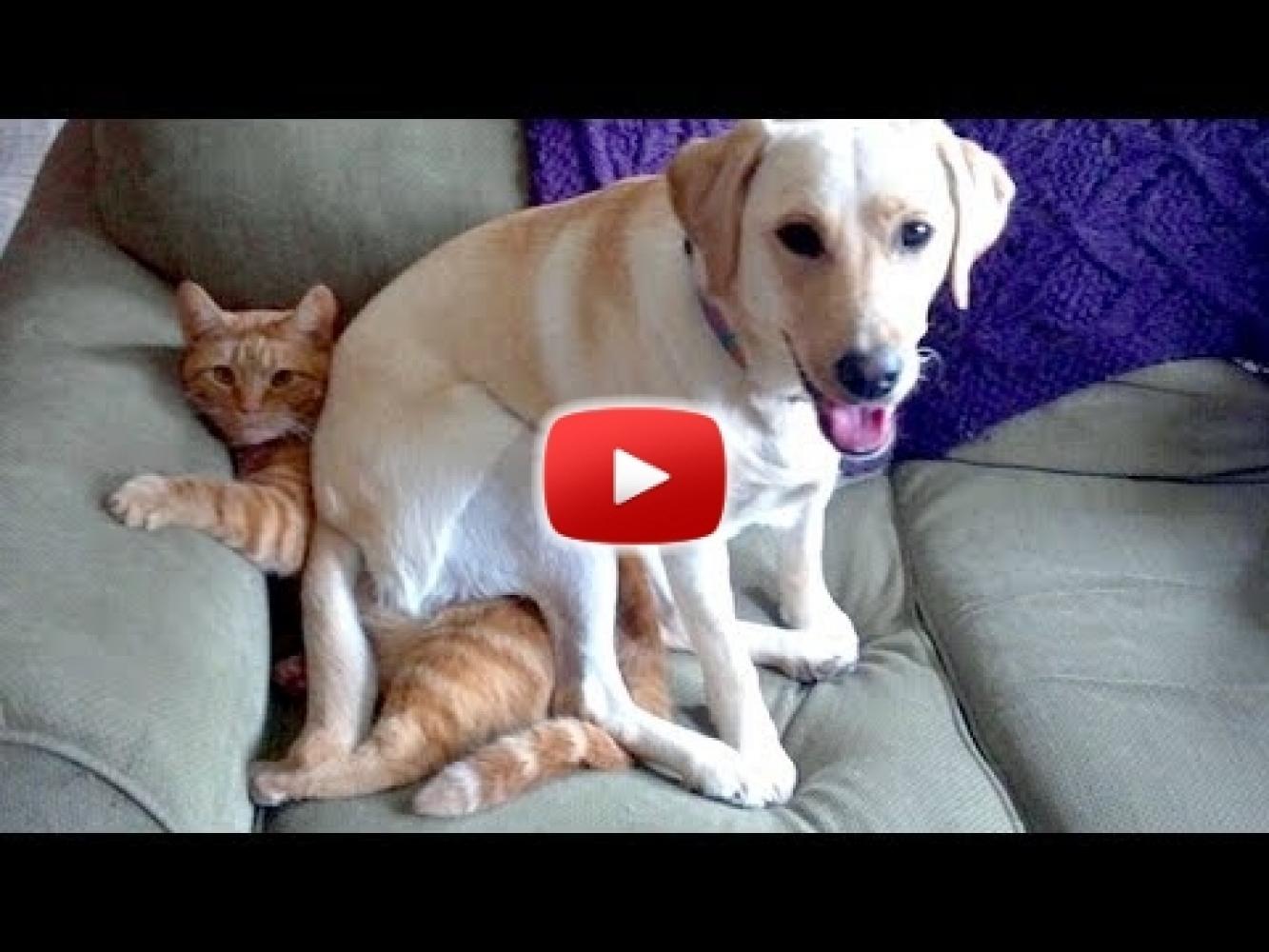 Humormagazin - Vicces állat videók - photo#46